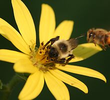 hey buzzy, share by Christopher  Ewing