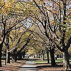 Winter Colour in Carlton by whoalse