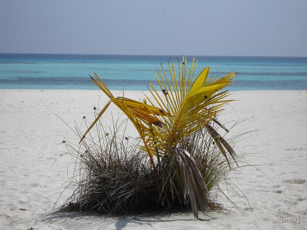Baby Palm tree by simonj