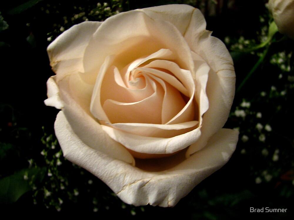 White Rose by Brad Sumner