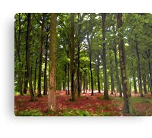 Beautiful Forest landscape Metal Print