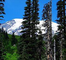 Mount Rainier 532 by jduffy111