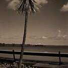The Pier and a Palm Tree by Kate Eling