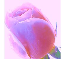 Dusky Pink Rose on Pink Sky Photographic Print