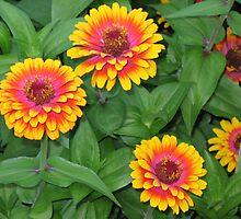 sunburst flowers by Brynne Kaufmann