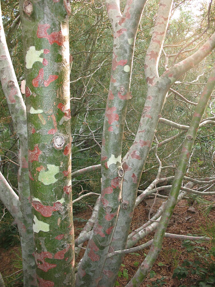 Lace tree by Brynne Kaufmann