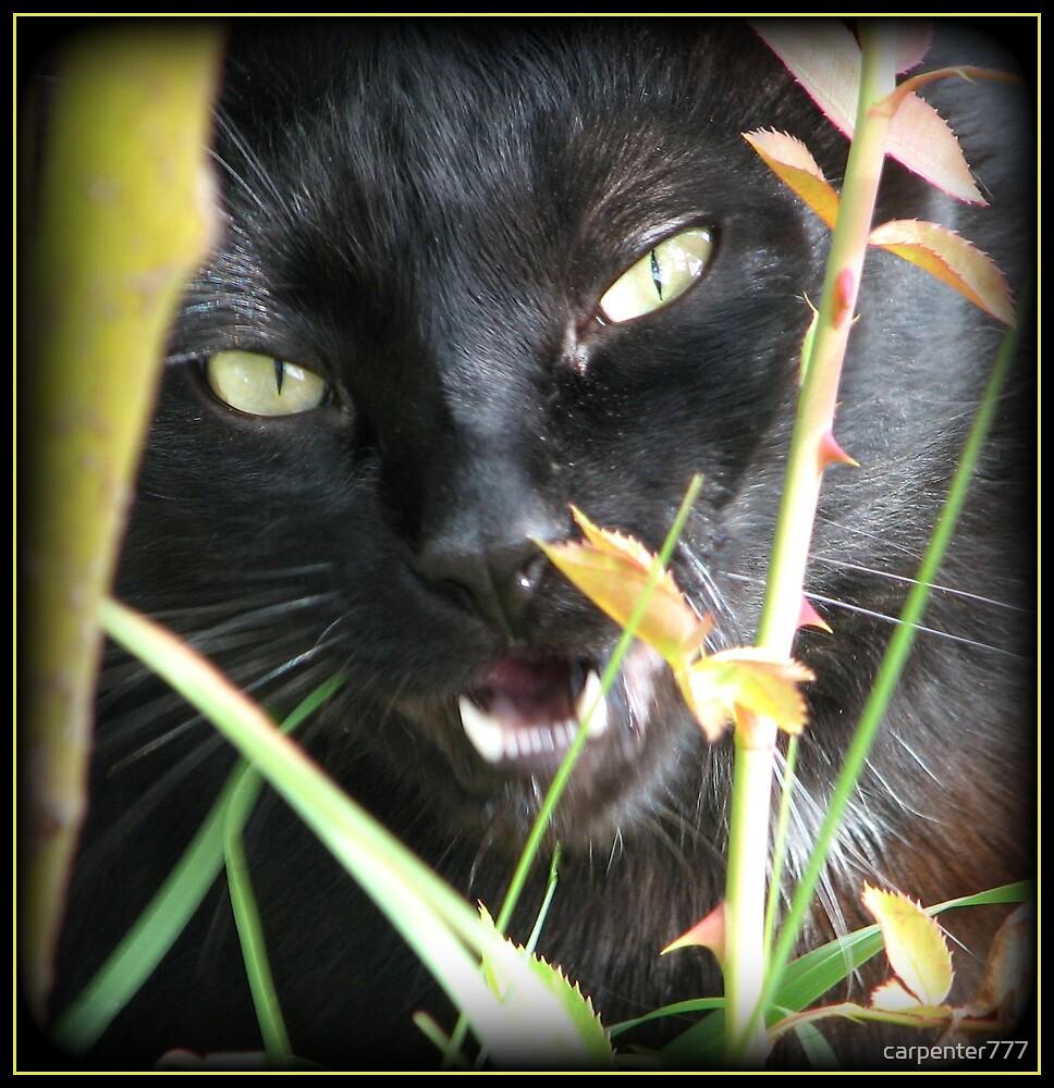 Yellow eyed cat three by carpenter777