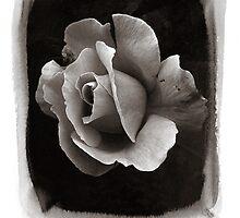 Rose l by spemj