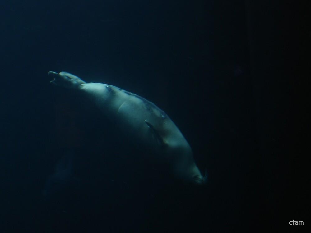 Seal Underwater by cfam