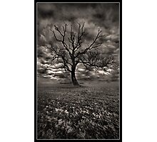 The Tree On Roxby Bends Photographic Print