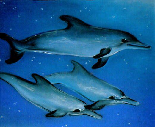 dolphins by kaleidoscopecreation