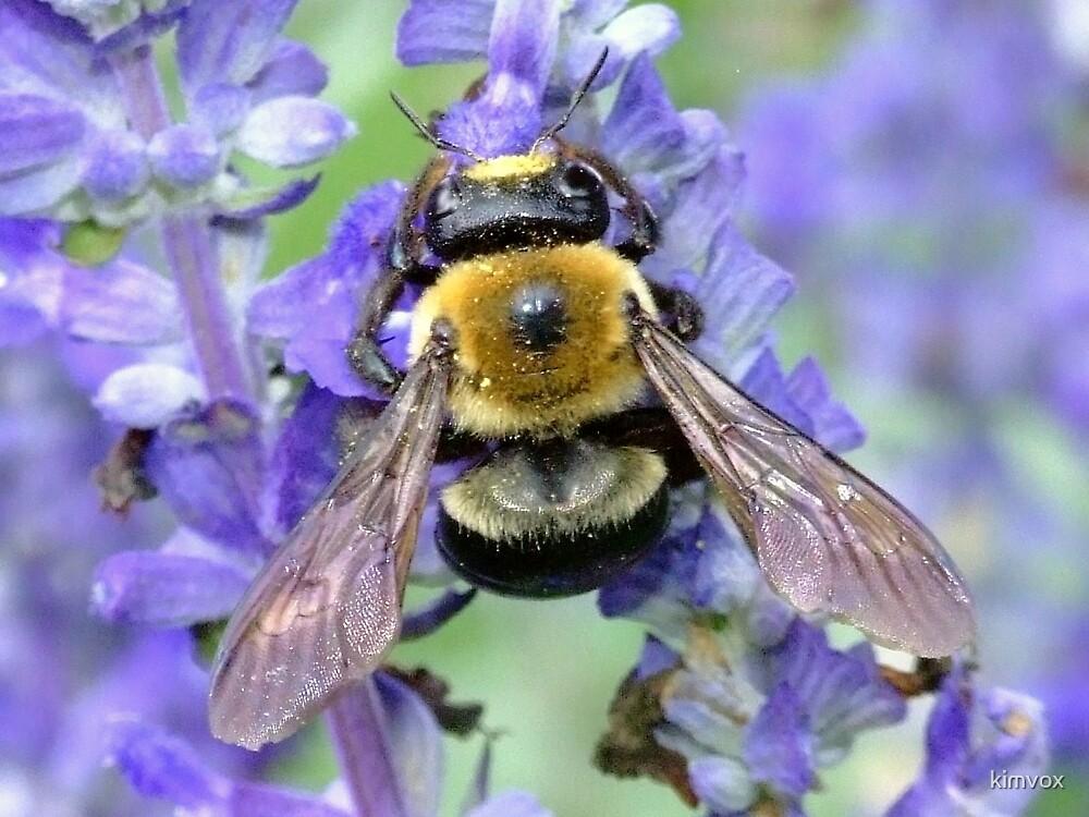 pollen count by kimvox