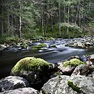 17.11.2014: River in the Forest by Petri Volanen