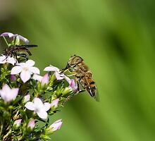 Pollination by Greg Nicolson