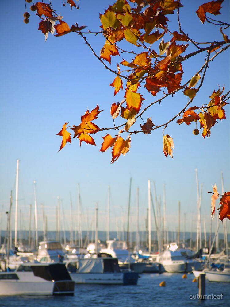 Autumn leaf at Matilda Bay by autumnleaf