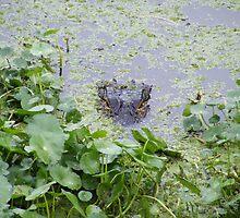 gator by wanda blake