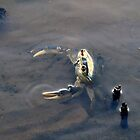 iPhone - The crab dance...  by Qnita