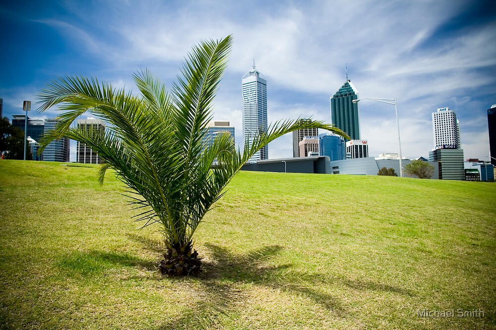 Palm Tree, Perth by hzopak