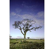 Rihanna Tree Wilting Photographic Print