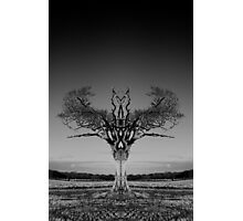 Rihanna Tree Symmetry Photographic Print