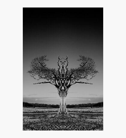 Rihanna Tree Symmetry Photographic Print