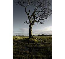 The Rihanna Tree, Singing Photographic Print