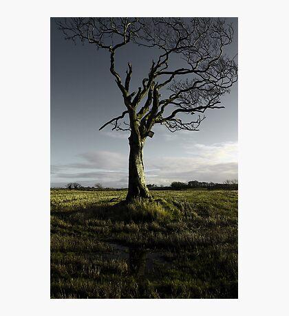 Rihanna Tree, Singing Photographic Print
