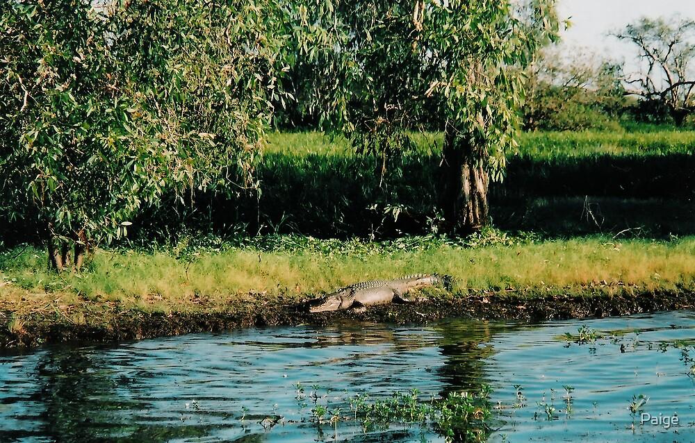 Croc by Paige
