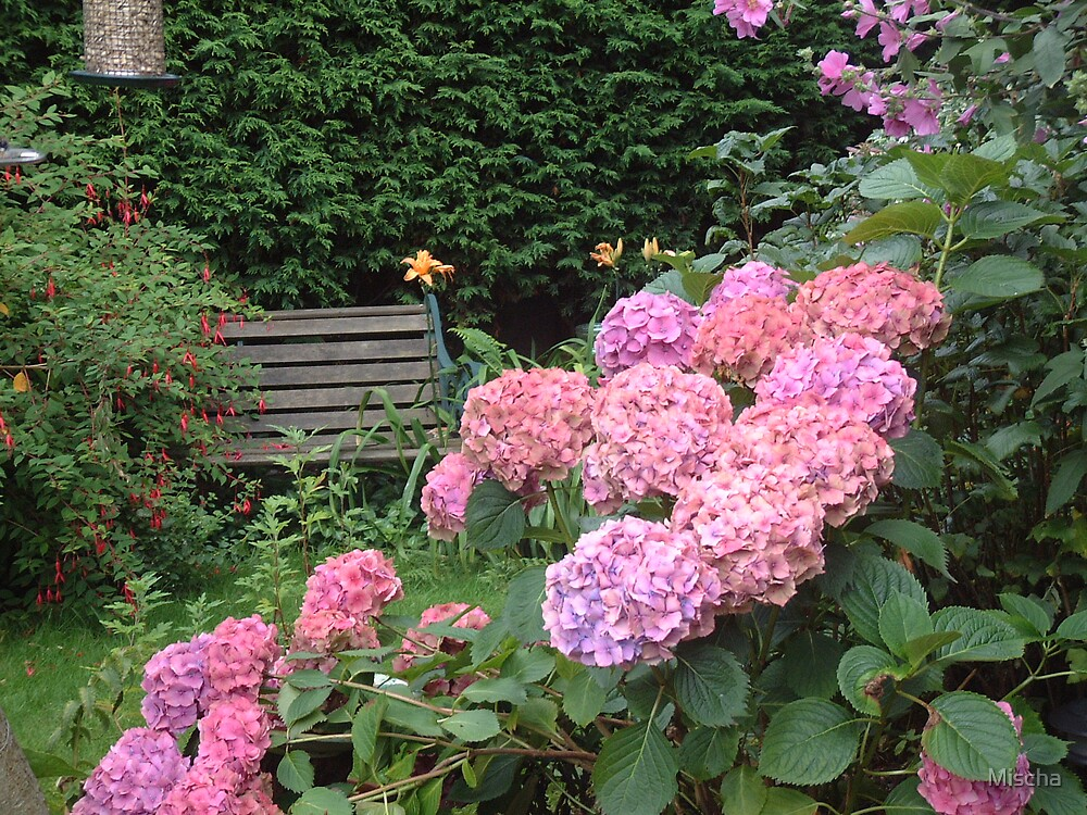 Pink Flowers and Bench by Mischa