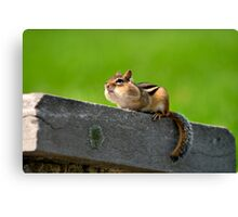 Don't tuch my nuts Canvas Print