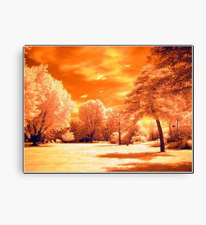 If The Trees Could Talk Canvas Print