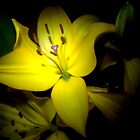 Yellow Lily by GeorgeOne