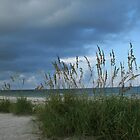 Sea Oats by the Gulf/Indian Rocks Beach, Florida by organic