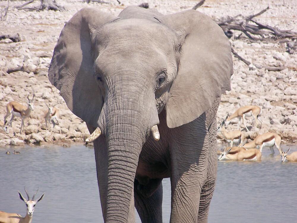 Elephant by Waterhole by tj107