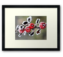 By golly - it was cold last night   !! Framed Print