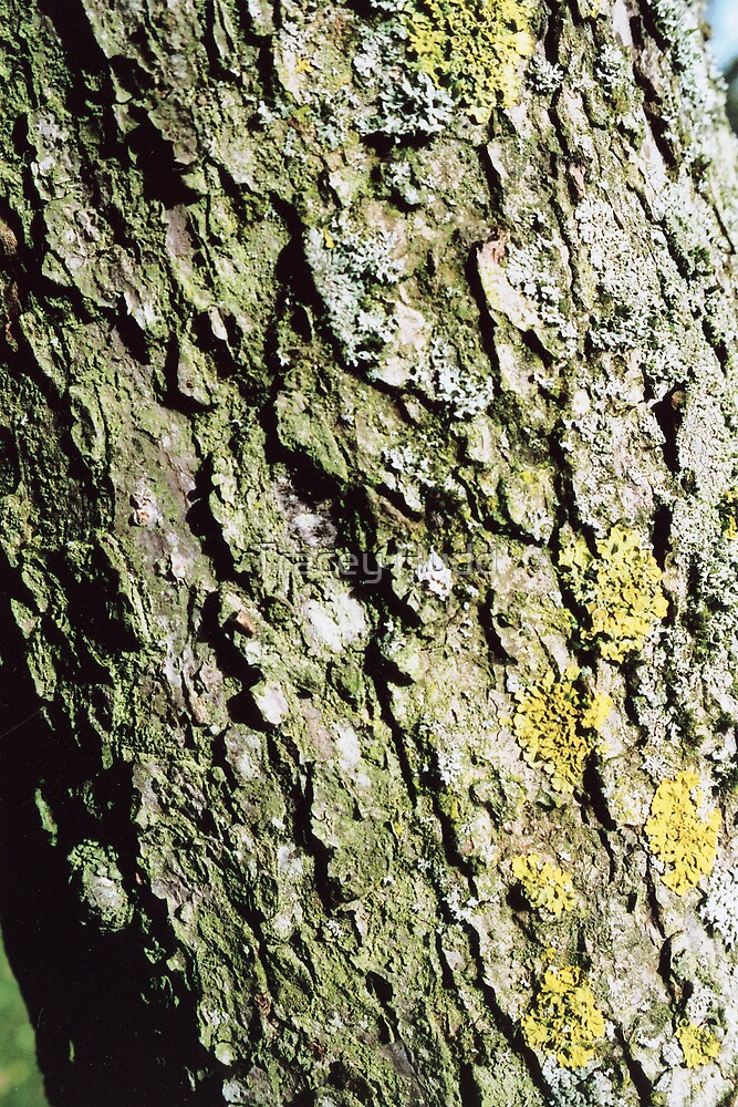 Bark by Tracey Hudd