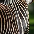 Zebra by Kate Eling