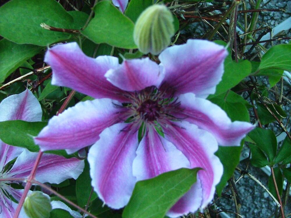 flower by matjenkins