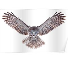 Great Grey Owl - Power Poster