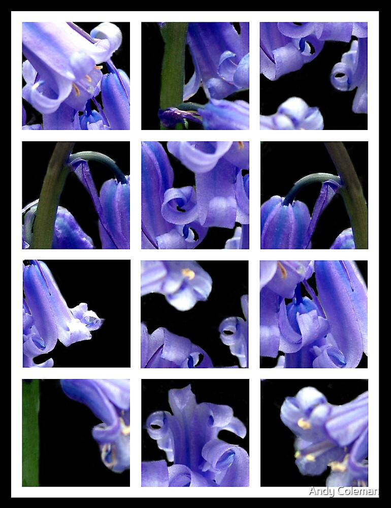 Bluebells Mix by Andy Coleman