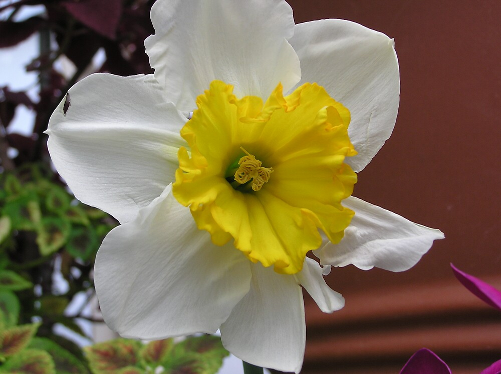 white and yellow flower by Kerri Kenel