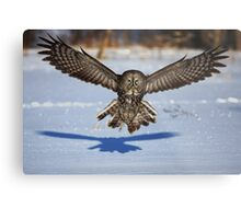 In your face - Great Grey Owl Metal Print