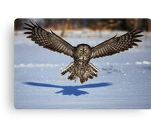 In your face - Great Grey Owl Canvas Print