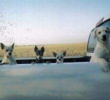 dogs by Esmeralda @->-------
