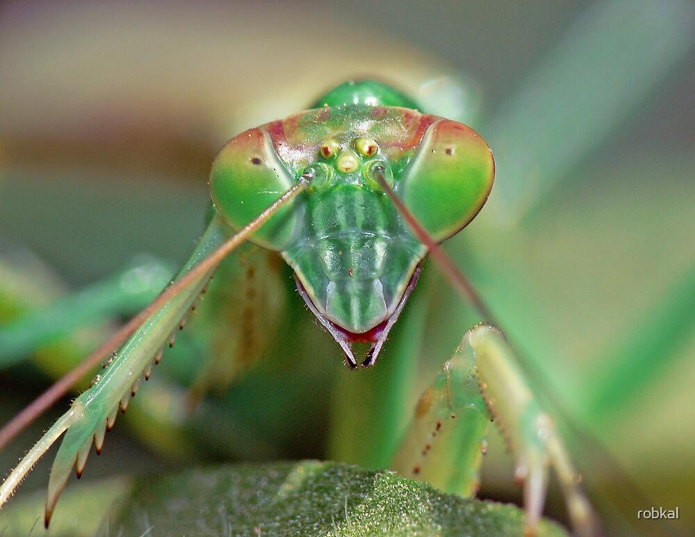 Praying Mantis by robkal