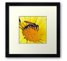 yellow jacket on flower Framed Print