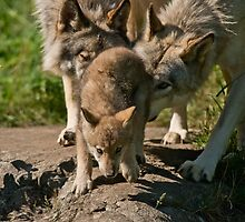 Timber Wolves And Pup by Michael Cummings