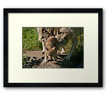 Timber Wolves And Pup Framed Print