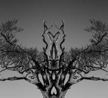 The Rihanna Tree Symmetry Sticker