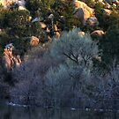 Cottonwood Dawn, Prescott Lake, Prescott, AZ by Wayne King